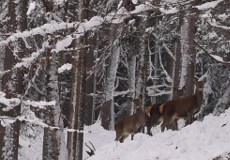 Wildtiere im Winter